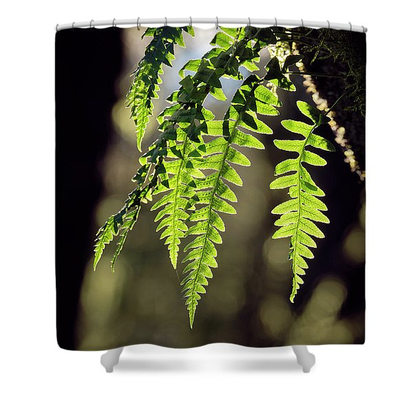 Shower Curtain featuring the photograph Licorice Fern by Whitney Goodey