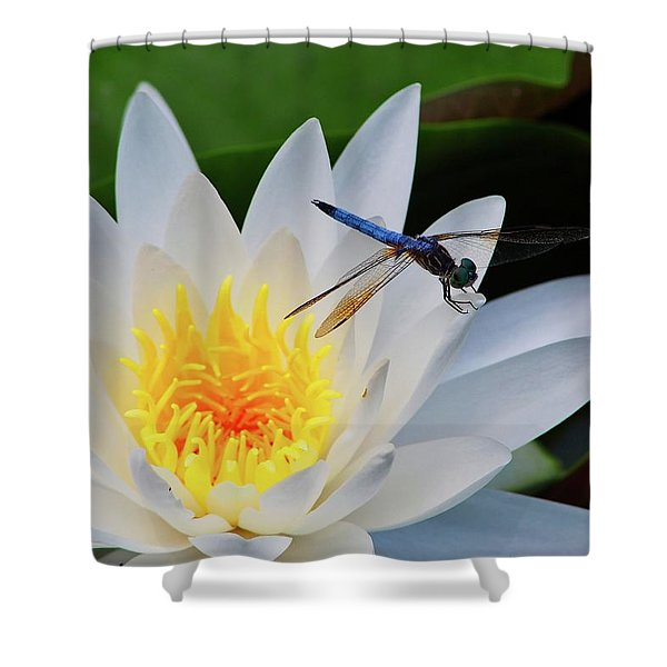 Lily And Dragonfly Shower Curtain