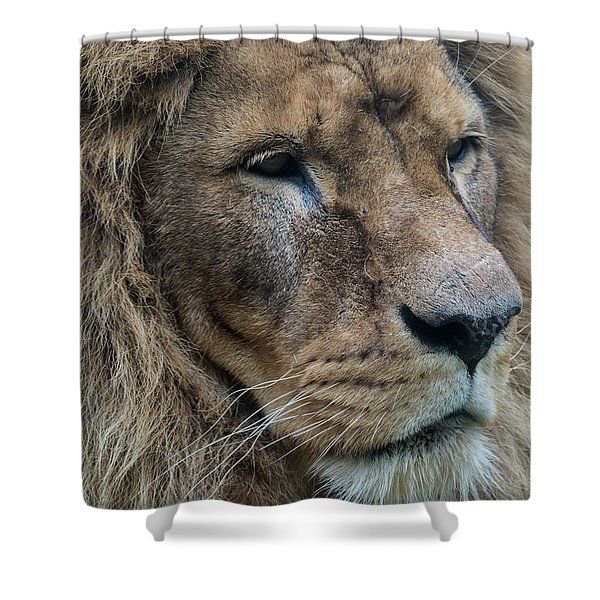 Shower Curtain featuring the photograph Lion by Anjo Ten Kate