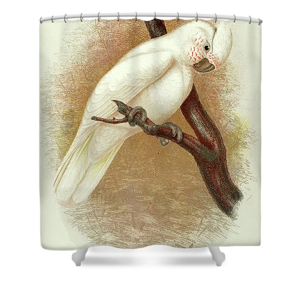 Little Corella Shower Curtain