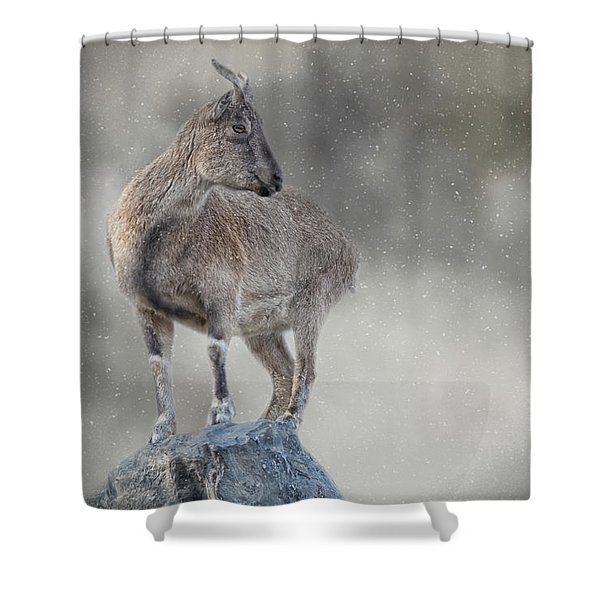 Little Rock Climber Shower Curtain
