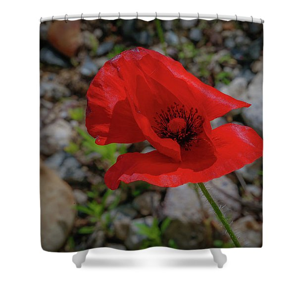 Lone Red Flower Shower Curtain