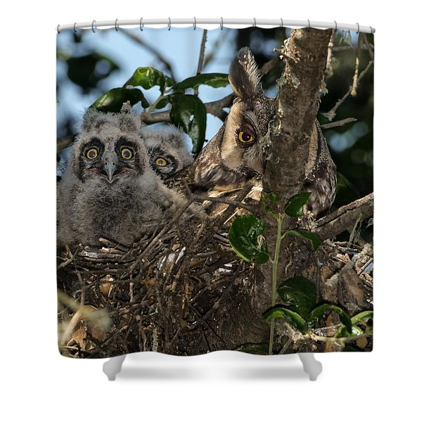 Long-eared Owl And Owlets Shower Curtain