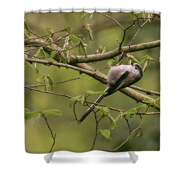 Long Tailed Tit Shower Curtain