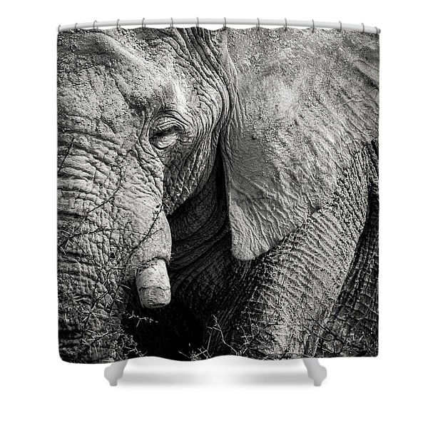 Look Of An Elephant Shower Curtain