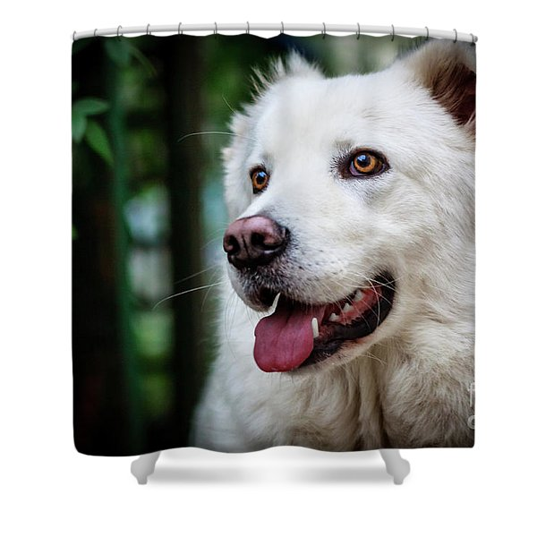 Looking Shower Curtain