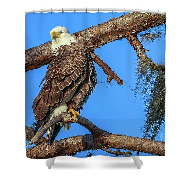 Shower Curtain featuring the photograph Lookout Eagle by Tom Claud