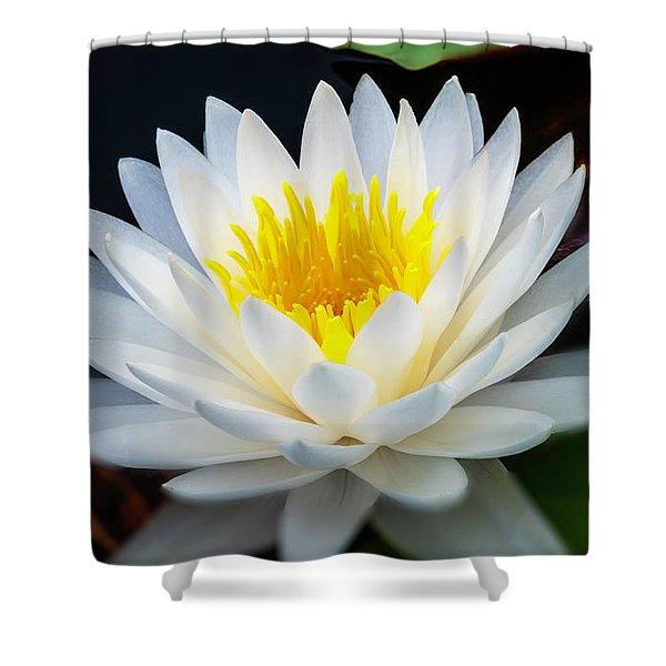 Lotus Gold Shower Curtain