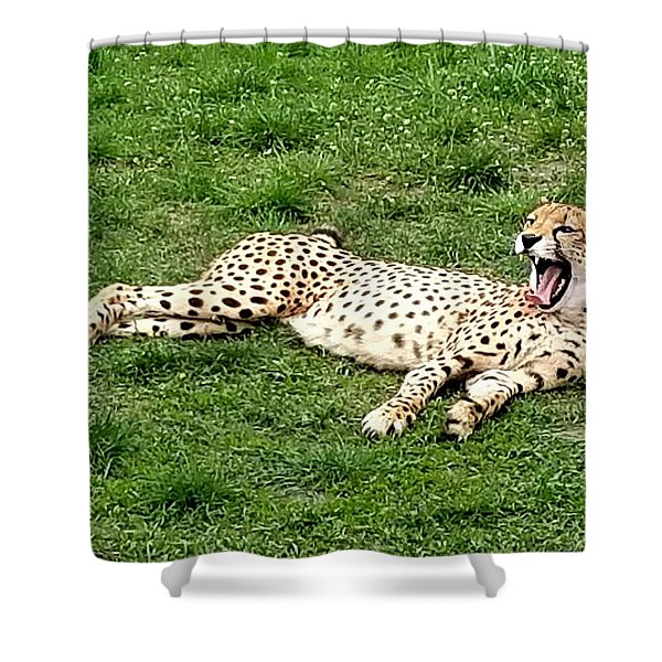 Lounging Cheetah Shower Curtain