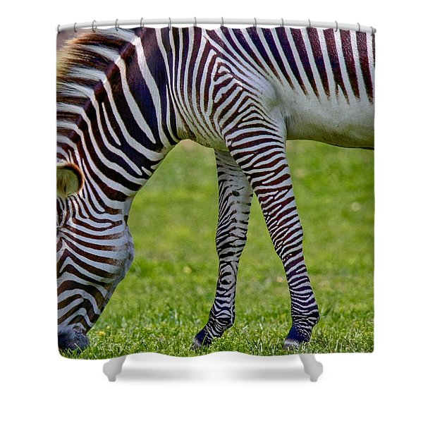 Love Zebras Shower Curtain