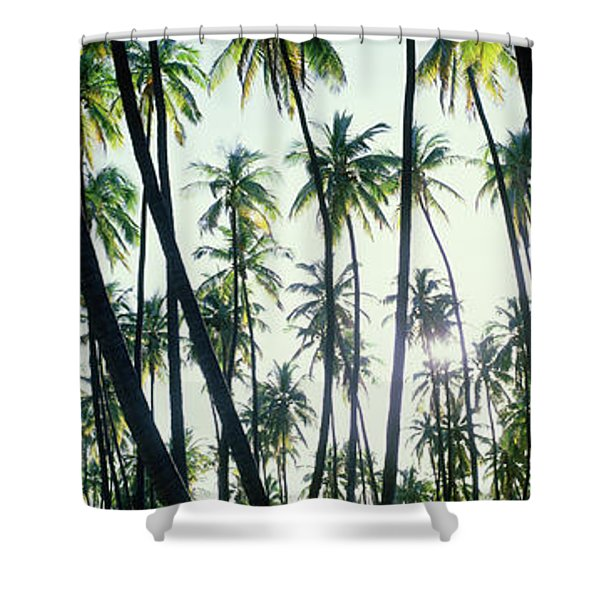 Low Angle View Of Coconut Palm Trees Shower Curtain