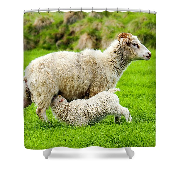 Lunchtime For Baby Lamb Shower Curtain