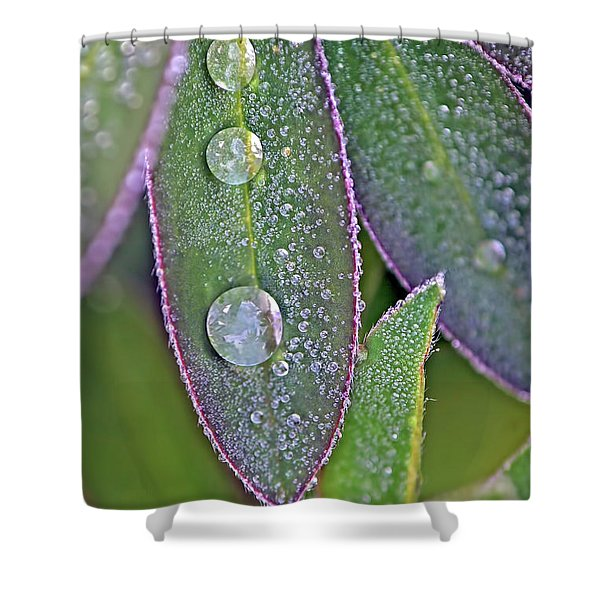 Lupin Leaves And Waterdrops Shower Curtain