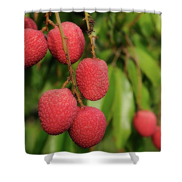 Lychee Fruit On Tree Shower Curtain