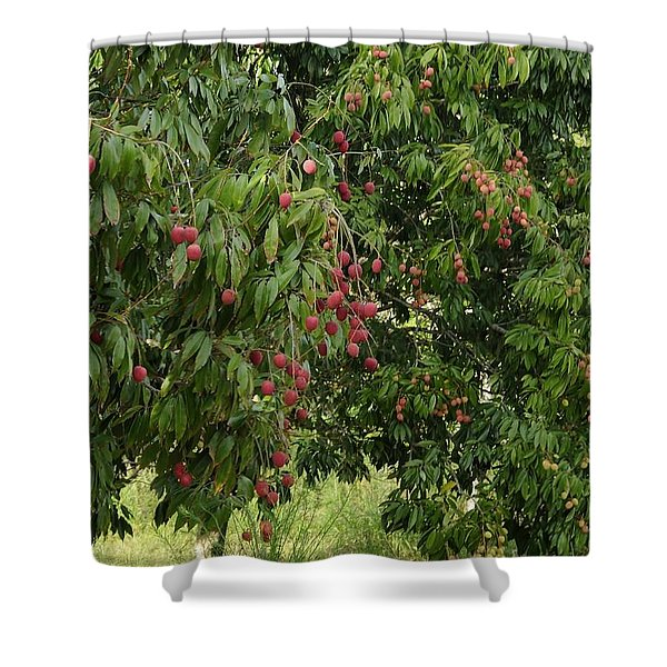 Lychee Tree With Fruit Shower Curtain