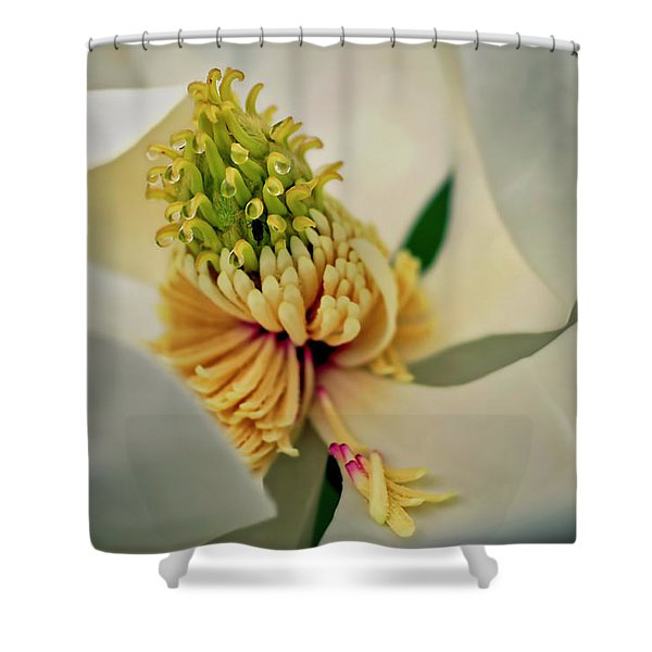 Shower Curtain featuring the photograph Magnolia Blossom by Meta Gatschenberger