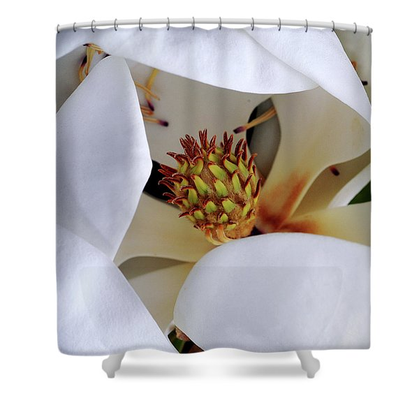 Magnolia Shower Curtain