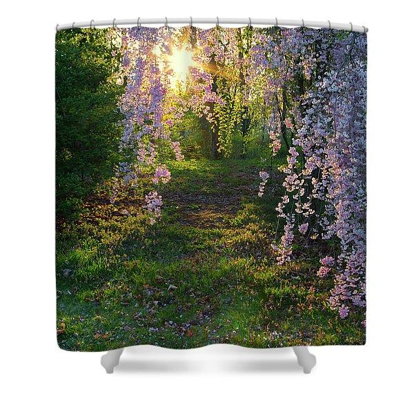 Magnolia Tree Sunset Shower Curtain