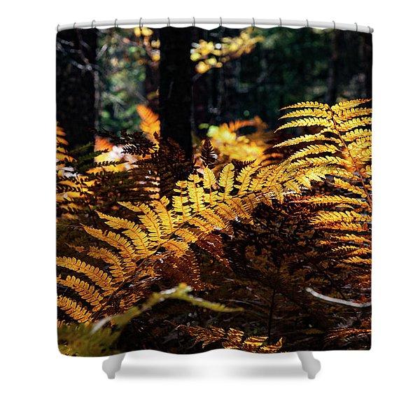 Maine Autumn Ferns Shower Curtain