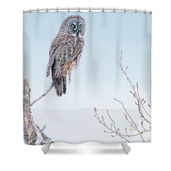 Majestic Great Gray Owl Shower Curtain