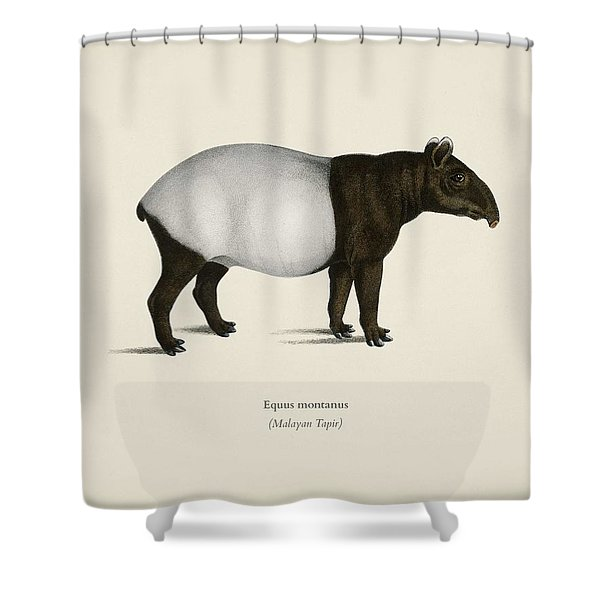 Malayan Tapir  Equus Montanus  Illustrated By Charles Dessalines D' Orbigny  1806-1876  2 Shower Curtain
