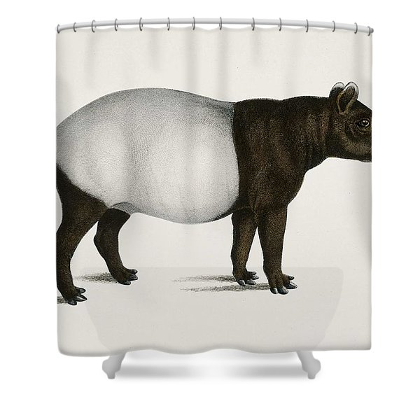 Malayan Tapir  Equus Montanus  Illustrated By Charles Dessalines D' Orbigny  1806-1876  Shower Curtain