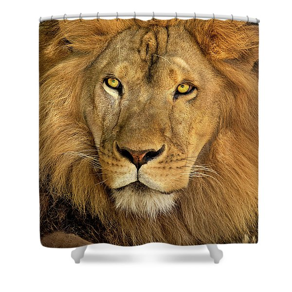 Male African Lion Portrait Wildlife Rescue Shower Curtain