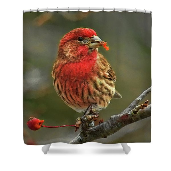 Male House Finch With Crabapple Shower Curtain