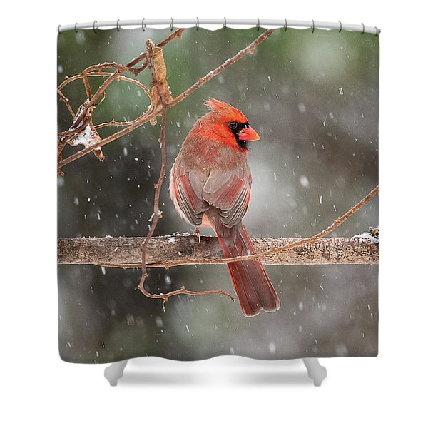 Male Red Cardinal Snowstorm Shower Curtain