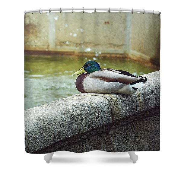 Mallard Resting On The Fountain Of The Fallen Angel In The Retiro Park - Madrid, Spain Shower Curtain