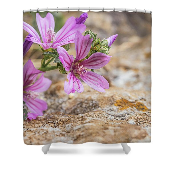 Malva Sylvestris - Spontaneous Flower Of The Tuscan Mountains Shower Curtain