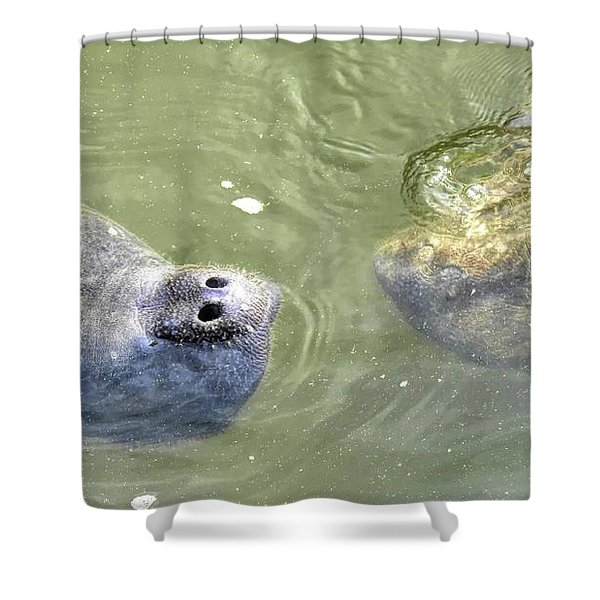 Manatee Love Shower Curtain