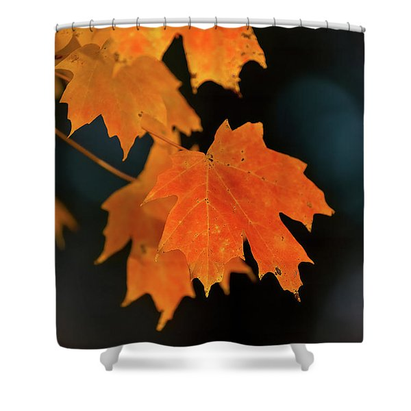 Maple-1 Shower Curtain