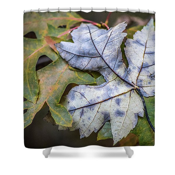 Maple And Oak Shower Curtain