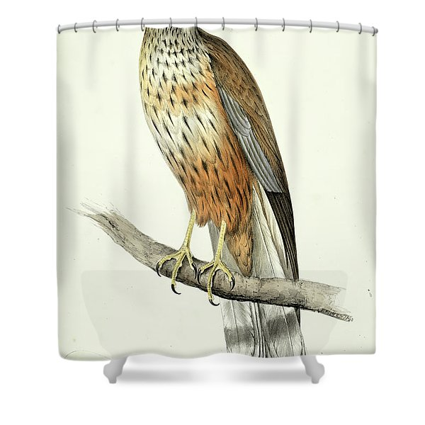 Marsh Harrier Shower Curtain