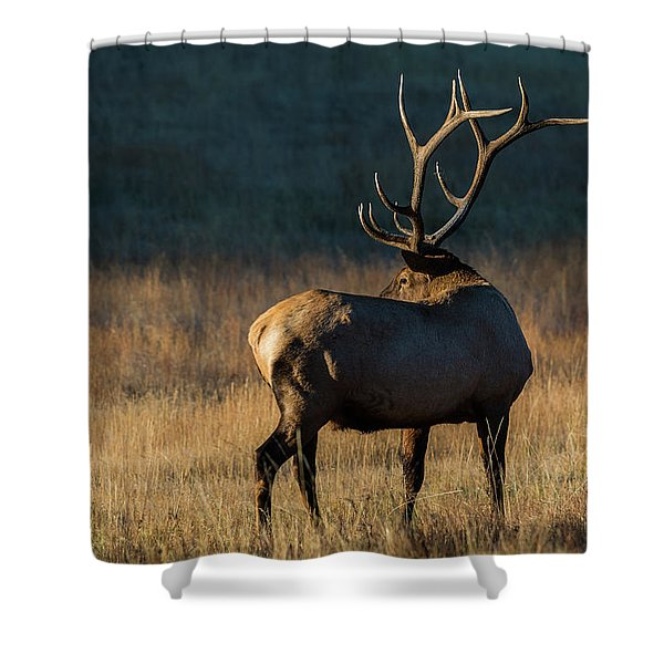 Shower Curtain featuring the photograph ME3 by Joshua Able's Wildlife