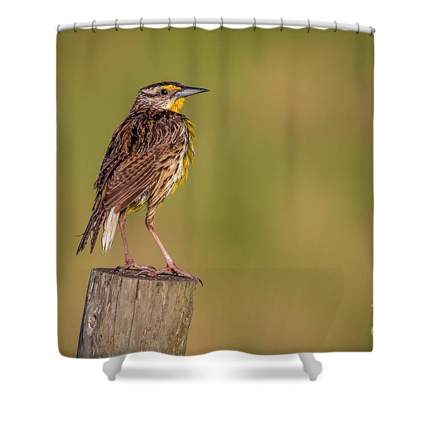 Shower Curtain featuring the photograph Meadowlark On Post by Tom Claud
