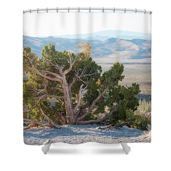 Mesquite In Nevada Desert Shower Curtain