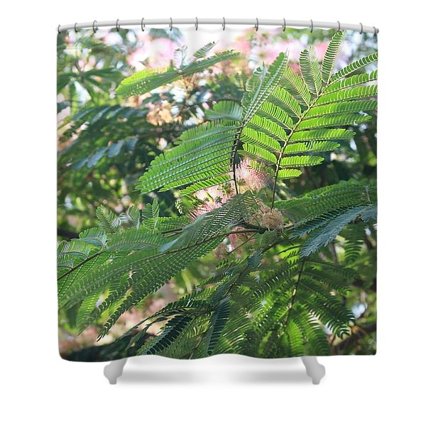 Mimosa Tree Blooms And Fronds Shower Curtain