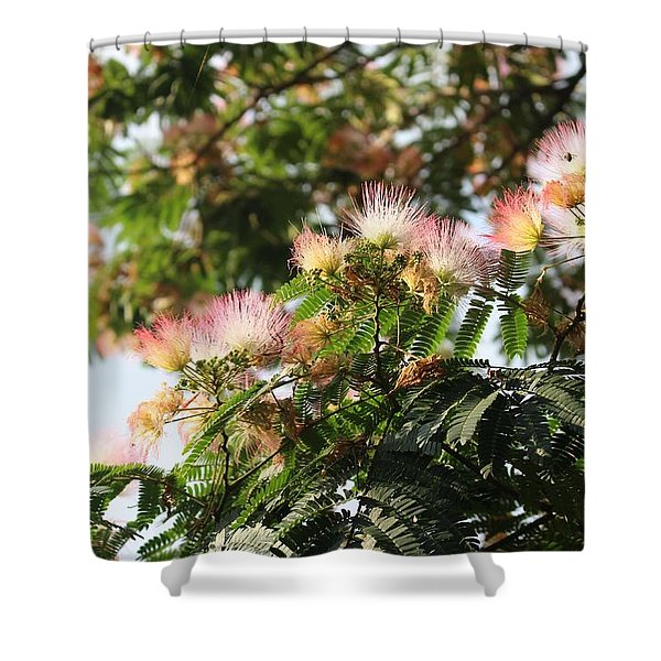 Mimosa Tree Flowers Shower Curtain