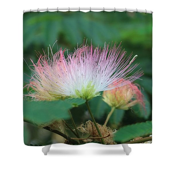 Mimosa Tree In Bloom Shower Curtain