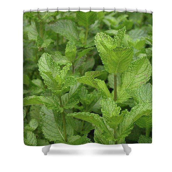 Minty Fresh Shower Curtain
