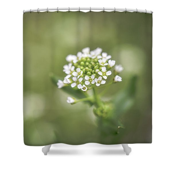 Shower Curtain featuring the photograph Miss You by Michelle Wermuth