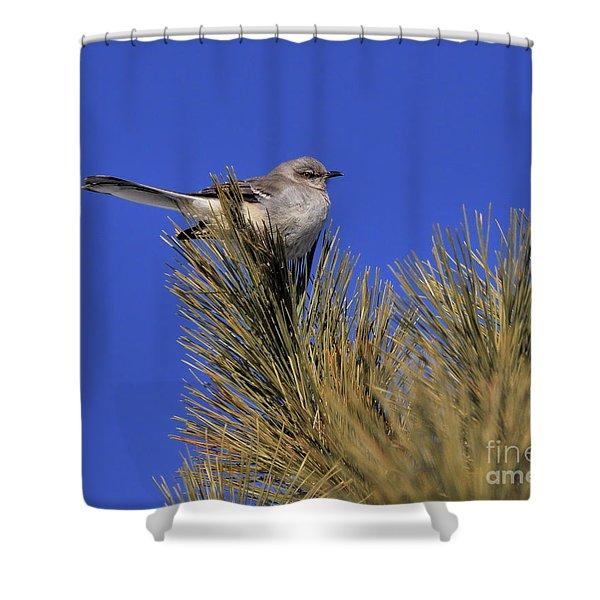 Mockingbird In White Pine Shower Curtain