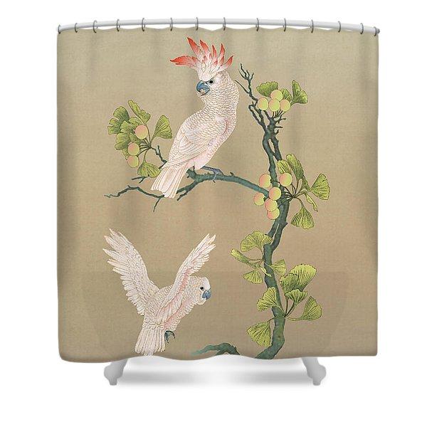 Moluccan Cockatoos  Shower Curtain
