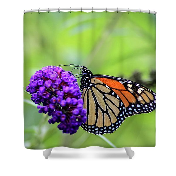 Shower Curtain featuring the photograph Monarch And Black Knight by Dawn Richards