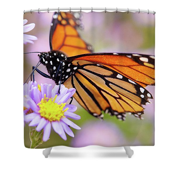 Monarch Close-up Shower Curtain