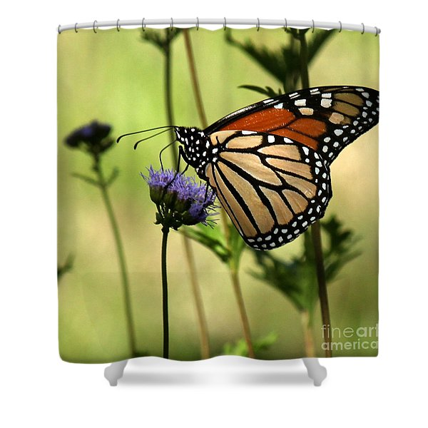 Monarch Majesty Shower Curtain