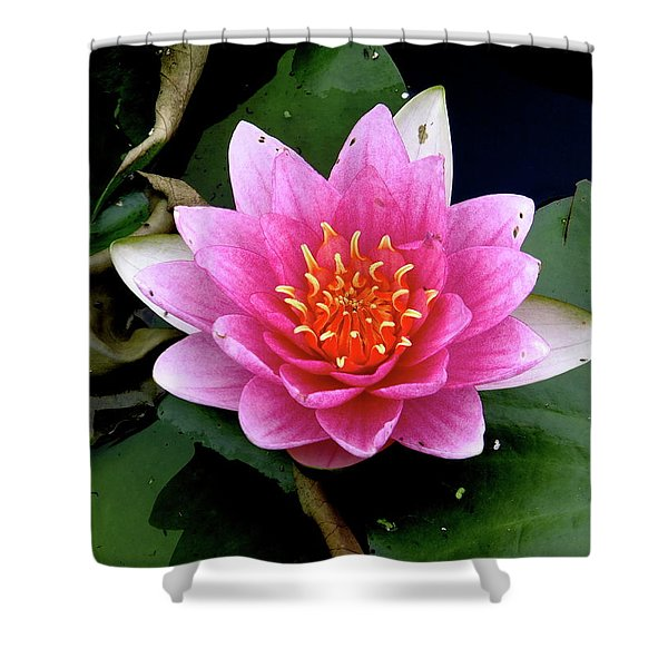 Monet Water Lilly Shower Curtain