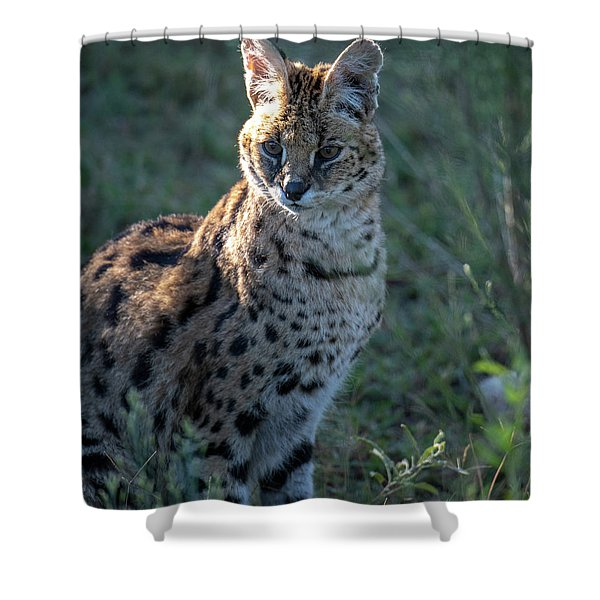 Morning Lit Serval Cat Shower Curtain